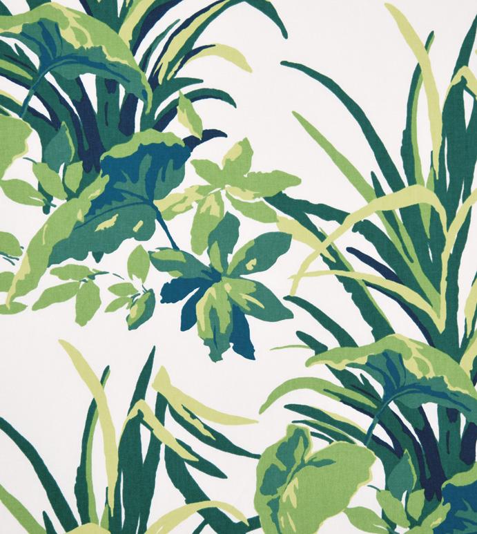 Amazonia Palm